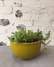 Yellow Bowl Pot