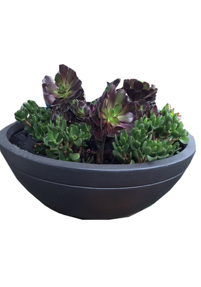 Bowls image