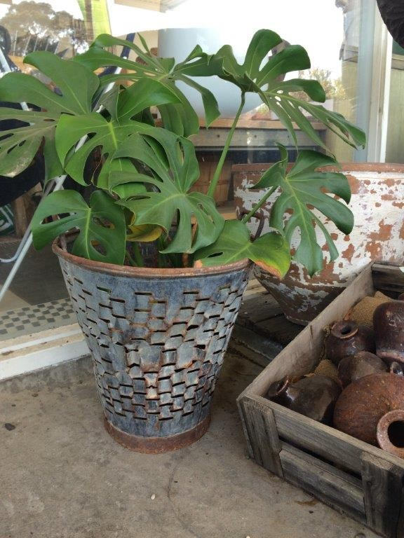 Metal Olive Pot