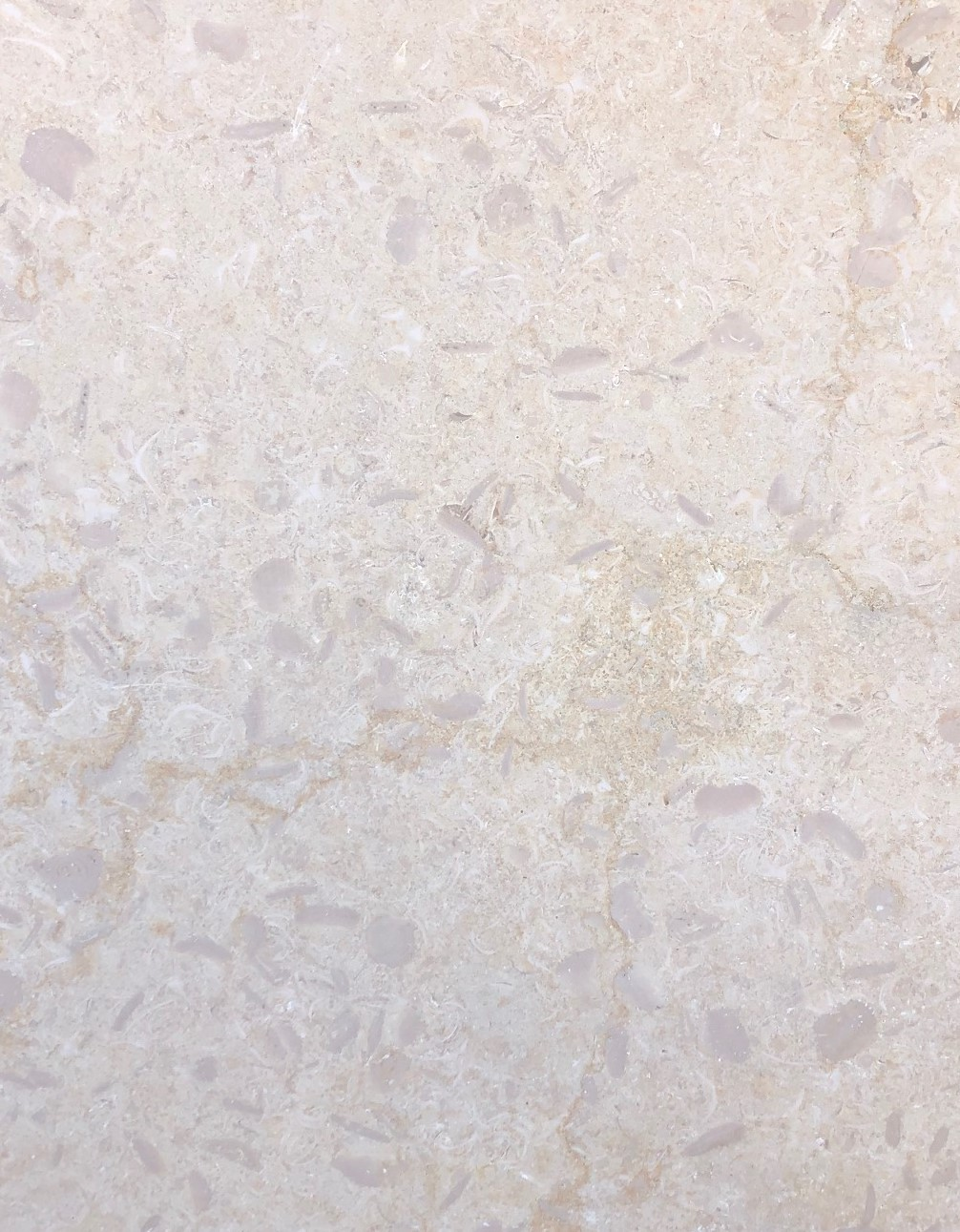 Shell Limestone